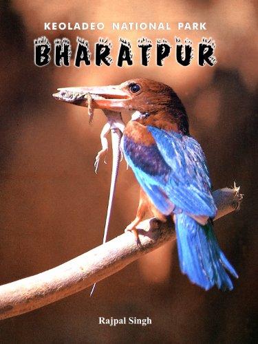 (Keoladeo National Park - Bharatpur)