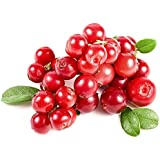 National Gardens Cranberry Fruit Seeds (Pack of 10 Seeds)