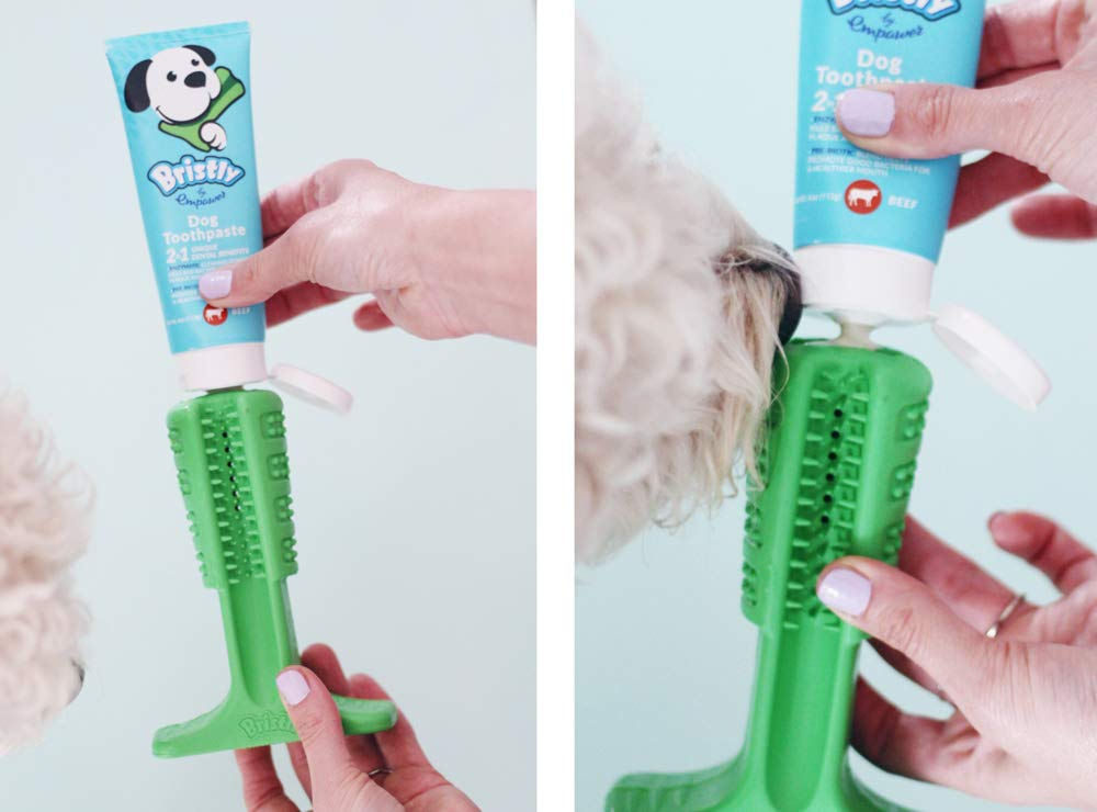 Bristly Brushing Stick Medium Dog DIY Toothbrush and Dog Dental Chews | Most Effective Dog Toothbrush by Bristly