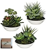 Sullivans Set of 3 Mini Artificial Succulents Potted in White Ceramic Bowls in Rustic Gift Box