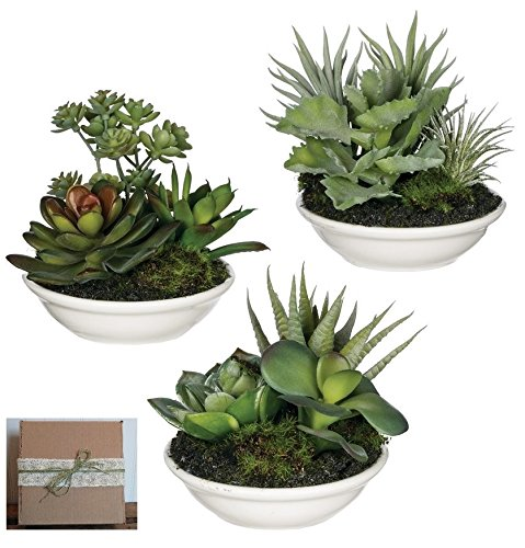 Sullivans Set of 3 Mini Artificial Succulents Potted in White Ceramic Bowls in Rustic Gift Box by Sullivans