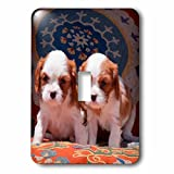 3dRose Danita Delimont - Puppies - Cavalier Puppies sitting on pillows, MR - Light Switch Covers - single toggle switch (lsp_258247_1)