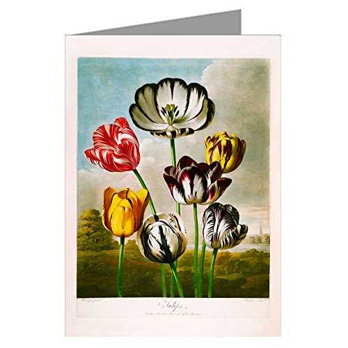 Single Greeting Card of Robert Thornton's Medical Illustration's of Tulips Flowers from His - Temple of Flora - Plant Book on The Sexual System of Linnaeus. - Robert Tulips