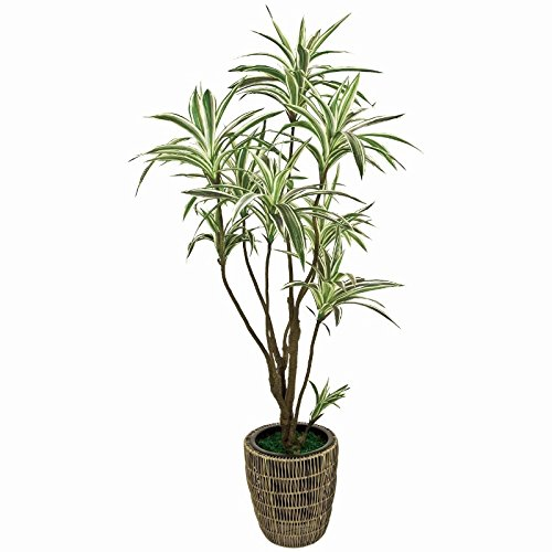人工観葉植物 ドラセナ 高さ165cm mgf15650 B072PT51JH