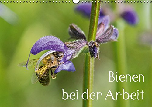 Bienen bei der Arbeit - Auf 13 Fotografien sammeln Krainer Bienen Nektar und Pollen auf Blumen un Bäumen. (Wall Calendar 2019, 14 Pages, Size DIN A3 = 11.7 x 16.5 inches) (Biene Nektar)