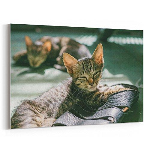 Westlake Art - Cat Mammal - 24x36 Canvas Print Wall Art - Ca