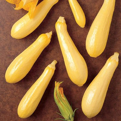 Yellow Summer Squash Multipik F1 - Untreated Seeds Package - 5,000 Seeds