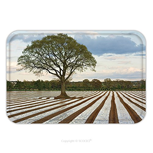 Lone Lobster (Flannel Microfiber Non-slip Rubber Backing Soft Absorbent Doormat Mat Rug Carpet Lone Tree In Ploughed Agricultural Field Making Use Of Agricultural Plastics For Modifying Crop Microclimates_24869480)