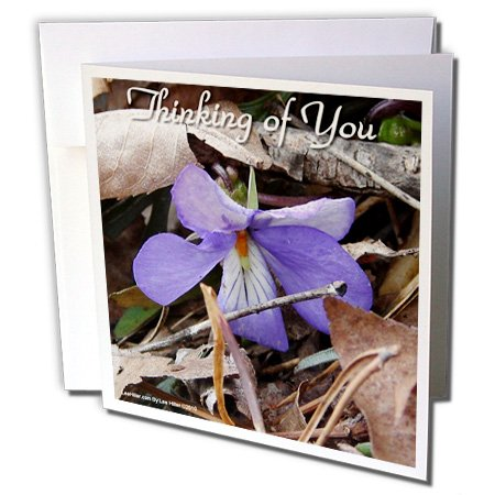 Lee Hiller Photography Photo Messages - Thinking of You - Birds-foot Violet - 6 Greeting Cards with envelopes (Lees Bird)