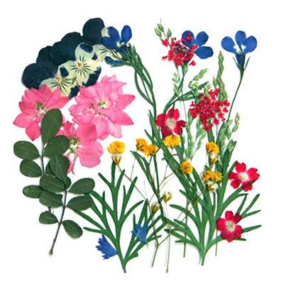 Pressed Flower, 2 Packs of Mixed Flowers. Art & Craft (Pressed Flowers)