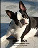 2019 - 2020 | 18 Month Weekly & Monthly Planner July 2019 to December 2020: Boston Terrier Dog Breed Pets Animal Vol 66 Monthly Calendar with U.S./UK/ ... Holidays- Calendar in Review/Notes 8 x 10 in.