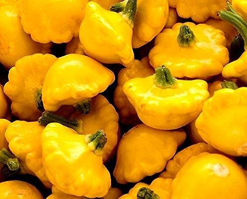 Semillas de Patty Pan Squash amarillas - Cucurbita pepo: Amazon.es ...