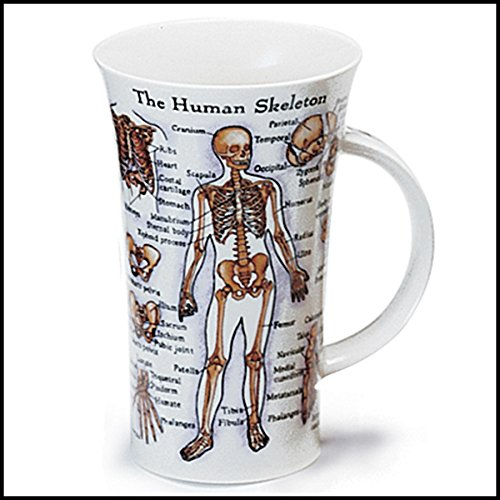 Dunoon Human Body Skeleton Fine Bone China Mug Glencoe ()