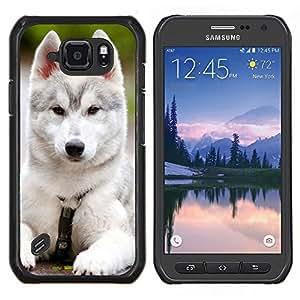 Caucho caso de Shell duro de la cubierta de accesorios de protecci¨®n BY RAYDREAMMM - Samsung Galaxy S6Active Active G890A - Siberian Husky Malamute Cachorro de perro negro