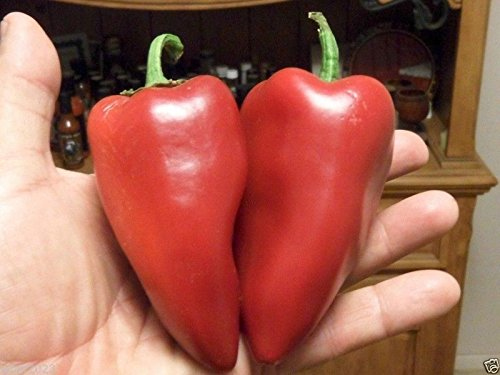 Lipstick Sweet pepper OG 25 SEEDS CONE SHAPED FRUITS JUICY & SWEET IN (Lipstick Red Salsa)