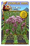 Everwilde Farms - Joe Pye Weed Native Wildflower Seeds - Jumbo Seed Packet (2000)
