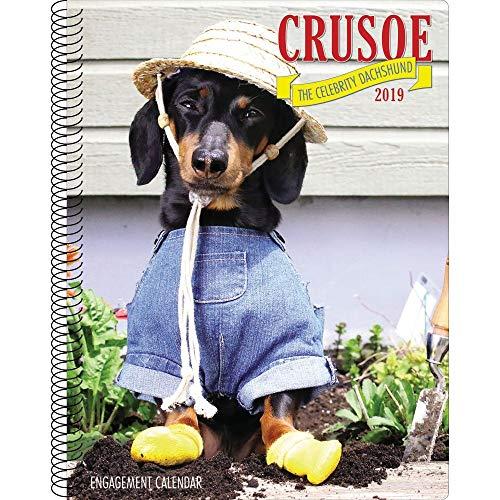 Crusoe the Celebrity Dachshund 2019 Engagement Calendar (Dog Breed Calendar) by Willow Creek Press