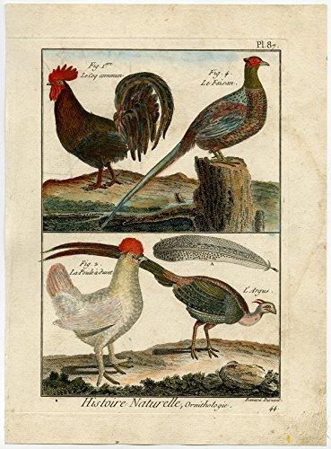 Antique Print-CHICKEN-ROOSTER-ARGUS-PHEASANT-PL. 87-Bonnaterre-Benard-c. 1790