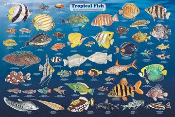 Amazon 123Posters Laminated Tropical Fish Aquarium Poster 24x36 Posters Prints