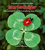 Marienkäfer: Die wunderbare Verwandlung aus dem Ei