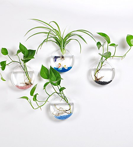 hanging-wall-glass-terrarium-air-plant-container-round-shape-pack-of-4