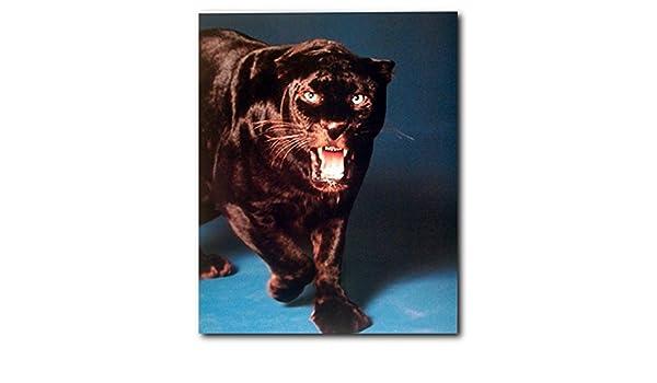 Wild Angry Black Panther Wildlife Animal Wall Decor Art Print Poster 16x20