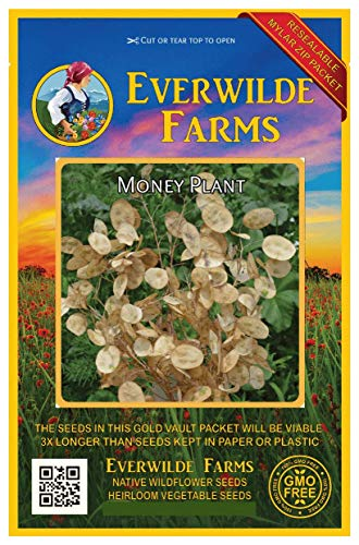 Everwilde Farms - 50 Money Plant Wildflower Seeds - Gold Vault Jumbo Seed Packet]()