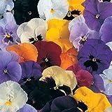 Pansy Flower Garden Seeds - Delta Premium F1 Series - Color Mix - 500 Seeds - Annual Flower Gardening Seed - Viola x wittrockiana