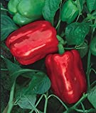 Chinese Giant Pepper 30 Seeds - Heirloom
