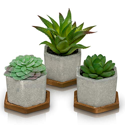 - Artificial Succulent Plants with Pots (Set of 3)   3 Faux Plants in Potted Light Gray Succulent Planters with Bamboo Base   Modern Home Décor Accents for the Office, Desk, Living Room, and More