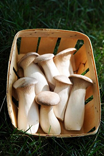 Trumpet Mushrooms - King Oyster Mushroom (Pleurotus eryngii) Mycelium Spores Spawn Dried Seeds (10g)