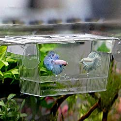 Fish Breeding Box - 1 Piece 728 ml Transparent Fish Breeding Box Aquarium Breeder Box Guppies Hatching Double Layer Self Floating Incubator