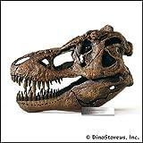 Tyrannosaurus Rex Skull Model, 1/4 Scale