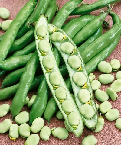 (Irish Eyes Garden Seeds- ORGANIC BEAN 1/2 lbs Sweet Lorane)