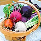 New Seeds 2015!Rare Beetroot seeds - MIX COLORS - SIX VARIETIES - Heirloom Organic Seeds garden decoration plant 20 pcs/Bag,#82M