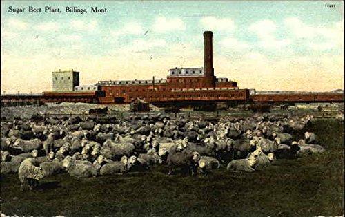 Sugar Beet Plant Billings, Montana Original Vintage - Billings Montana Stores