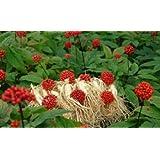 Herbal, Ginseng Seeds, American Ginseng, 100 Seeds