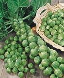 Long Island Improved Brussel Sprouts Seeds - Brassica Oleracea Var. Gemmifera - 1 Grams - Approx 280 Gardening Seeds - Vegetable Garden Seed