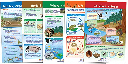 NewPath Learning 94-1501 All About Animals Bulletin Board Chart Set (Pack of 5) (Life Cycle Poster Laminated)