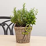 Cultivating Herb Duet - Live Plant-Thanksgiving Gift-Mothers Day Gift - Get Well Plant Gift - Thank You Plant Gift - Ships fast via 2-Day Air - Ships fast via EXPRESS DELIVERY