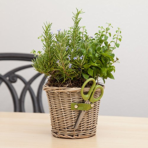 Cultivating Herb Duet - Live Plant-Thanksgiving Gift-Mothers Day Gift - Get Well Plant Gift - Thank You Plant Gift - Ships fast via 2-Day Air - Ships fast via EXPRESS DELIVERY by GivingPlants