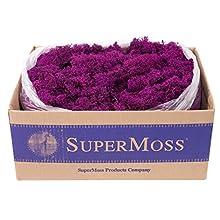 SuperMoss (23169) Reindeer Moss Preserved, Fuchsia, 3lbs