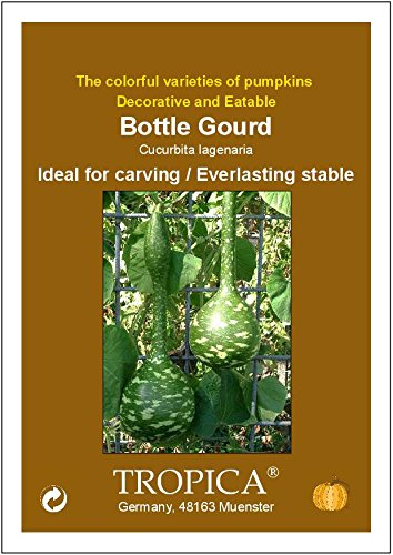 calabaza botella gigantesca Cucurbita lagenaria calabaza - 15 semillas TROPICA