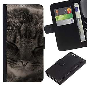 EJOY---La carpeta del tirón la caja de cuero de alta calidad de la PU Caso protector / Apple Iphone 6 PLUS 5.5 / --Manx American Shorthair Cat Dormir