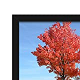 "Document Frame 8.5x11 Inch Standard Paper Frame without Mat to Display Pictures 8.5""x11"" Wall Mounting Certificate Frames If Add Mat Can As 8x10 7x11 7x9 6x8 5x7 4x6 3.5x5 Frame (2PACK)"