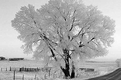 道路側の冷凍の木の壁紙-自然の壁紙-#51649 - 白黒の キャンバス ステッカー 印刷 壁紙ポスター はがせるシール式 写真 特大 絵画 壁飾り75cmx50cm