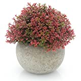 Velener Mini Plastic Artificial Pine Ball Topiary Plant with Pots for Home Decor (Red Clover)