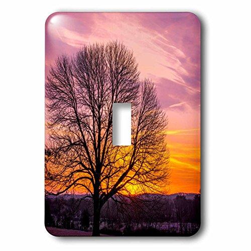Danita Delimont - Sunrise - USA, Pennsylvania, King of Prussia. Tree silhouette at sunrise. - Light Switch Covers - single toggle switch - King Of Prussia Outlet