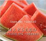 buy Mr.seeds 10 watermelon Seeds Seedless watermelon sweet&juice very tasty easy-growing now, new 2018-2017 bestseller, review and Photo, best price $10.00