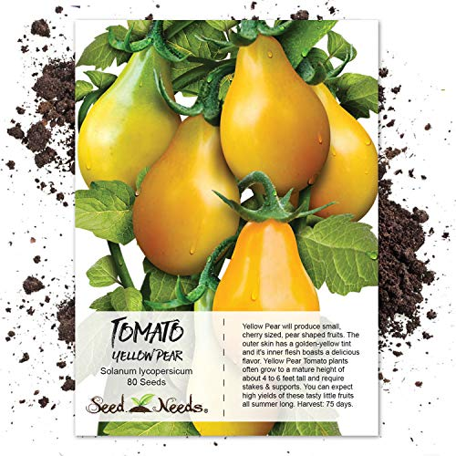 Seed Needs, Yellow Pear Tomato (Solanum lycopersicum) 80 Seeds Non-GMO
